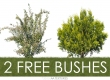2 free cut bushes by AA Textures