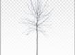 free cutout-tree