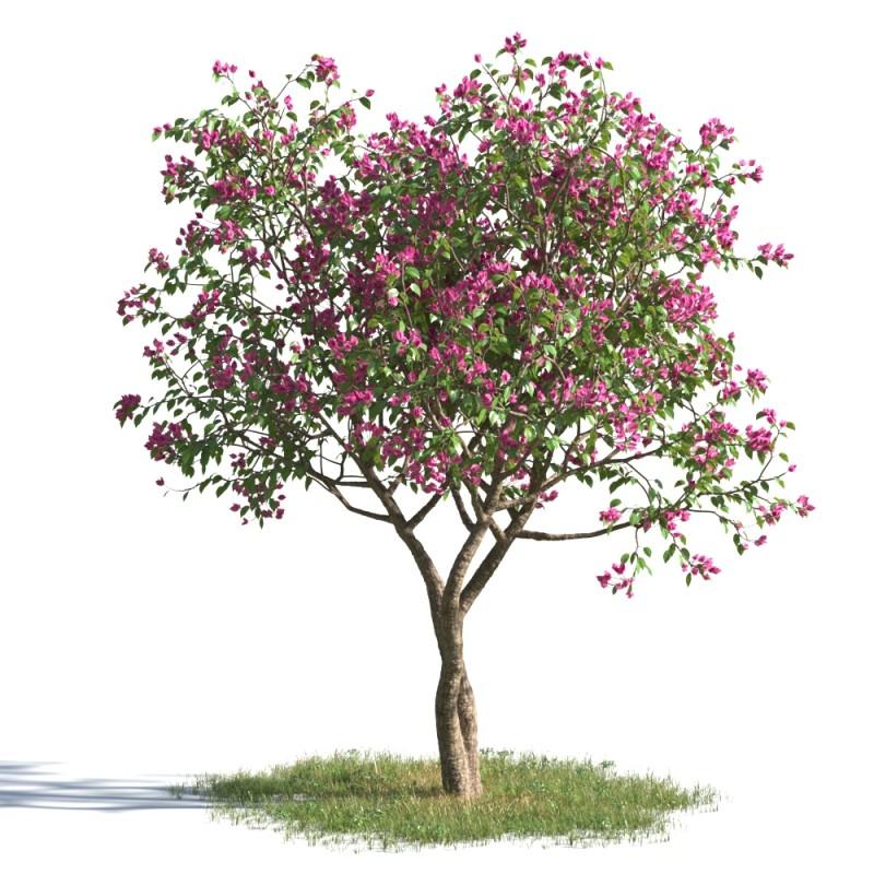 tree 12 AMC1