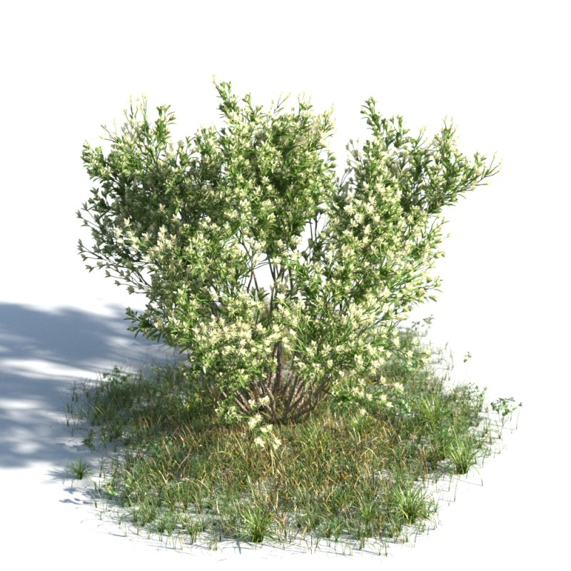 plant 11 AMC1