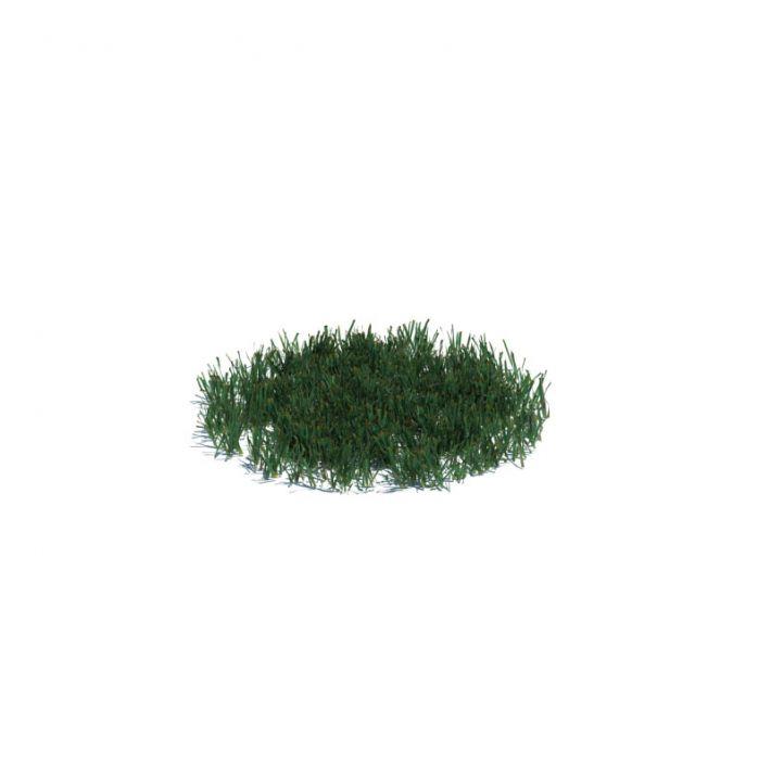 simple grass medium 017 am126