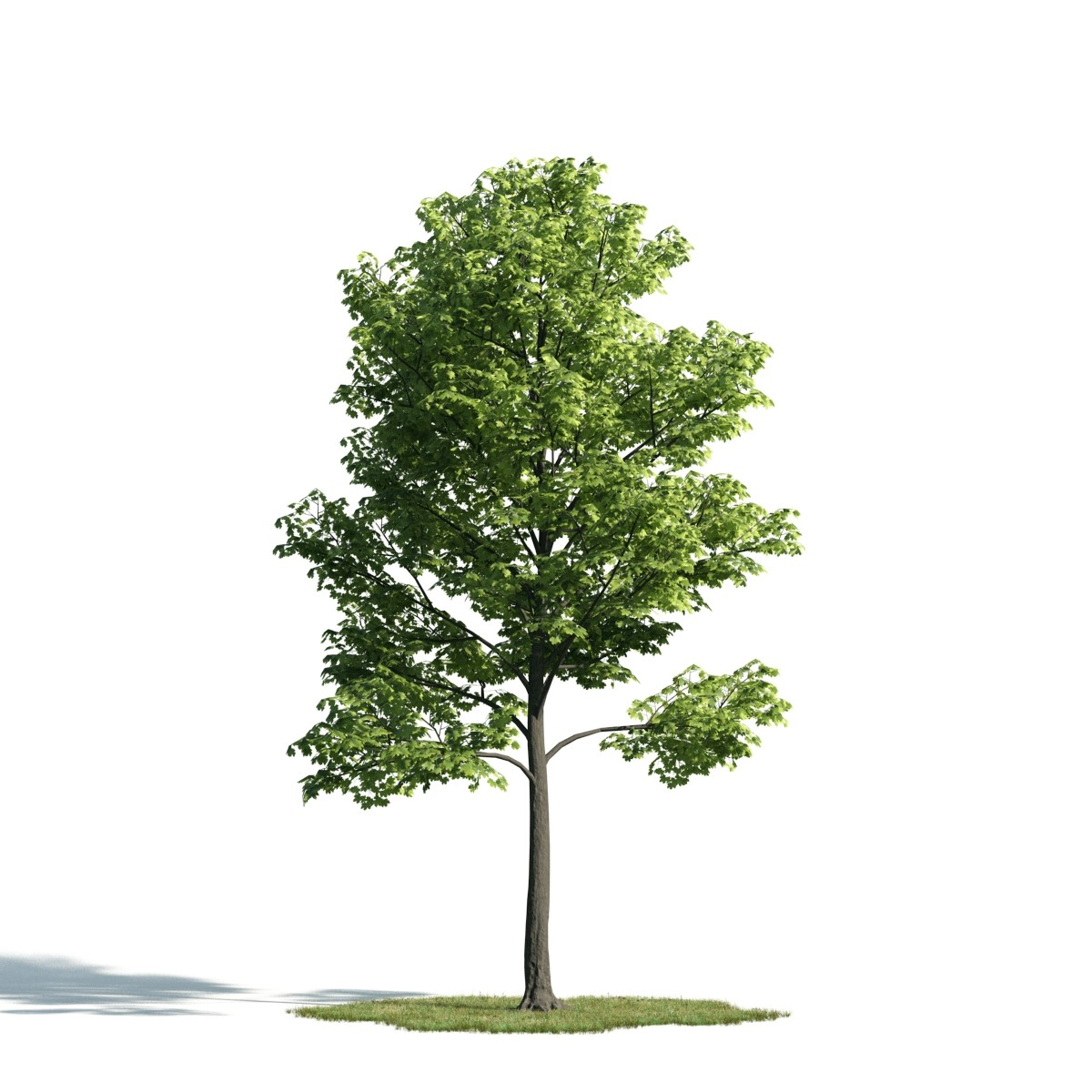 Tree 28 am171