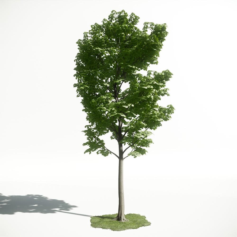 Tree 29 amce1