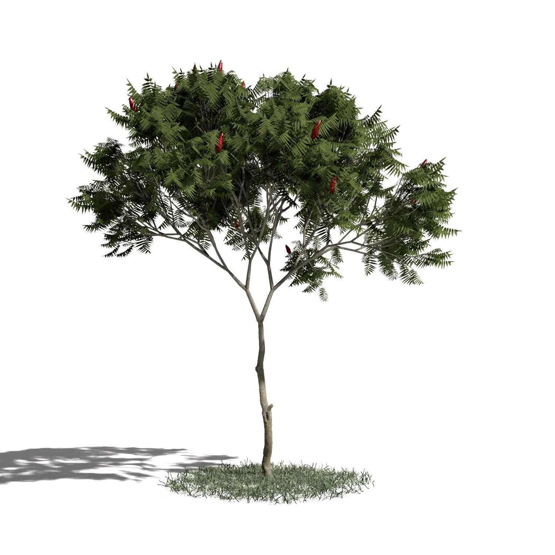Tree 04 amb1