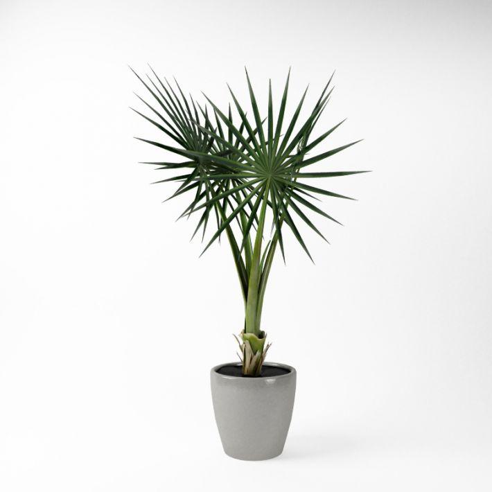 Plant 47 AM75