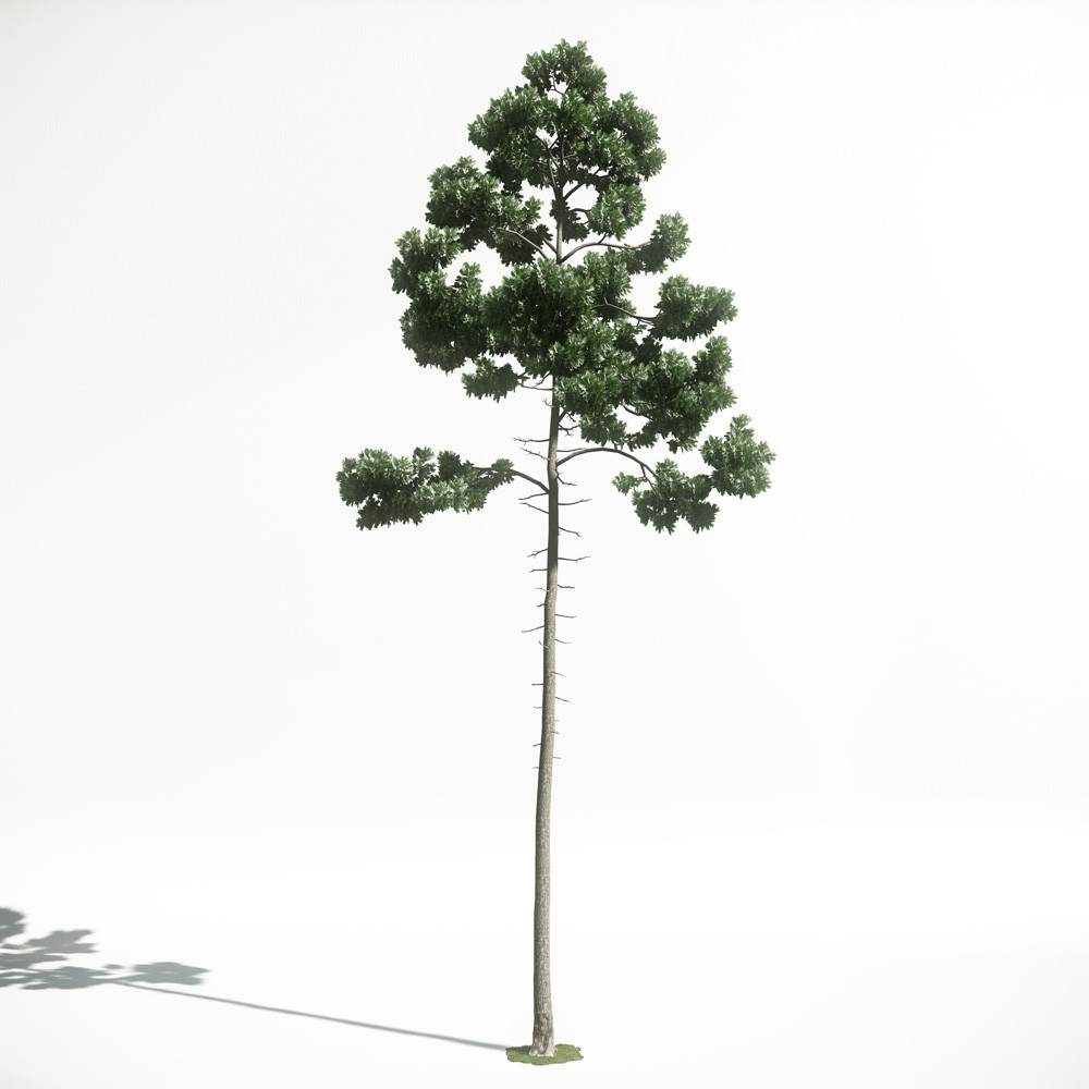 Tree 45 AM1 for CryEngine Archmodels