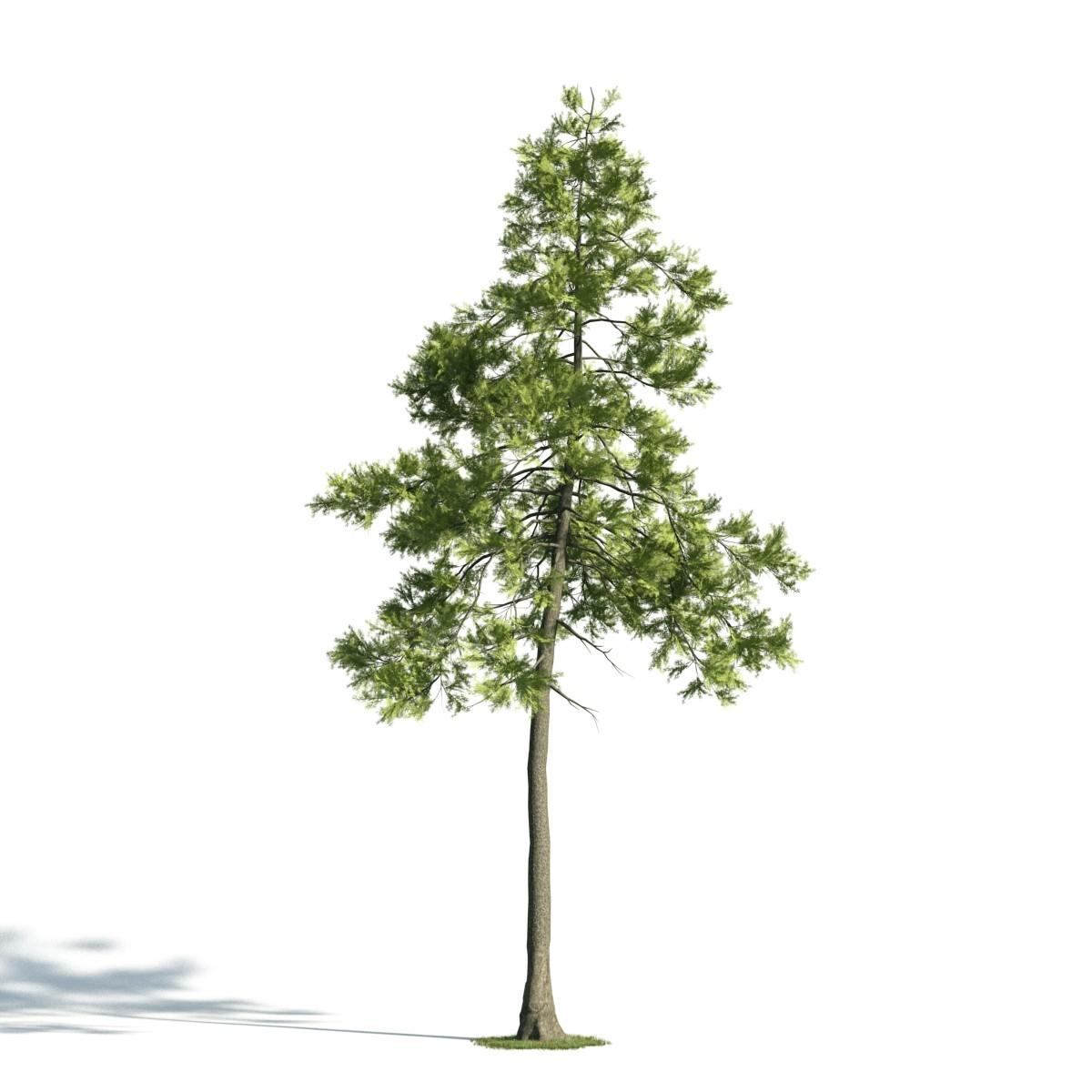 Tree 25 am171