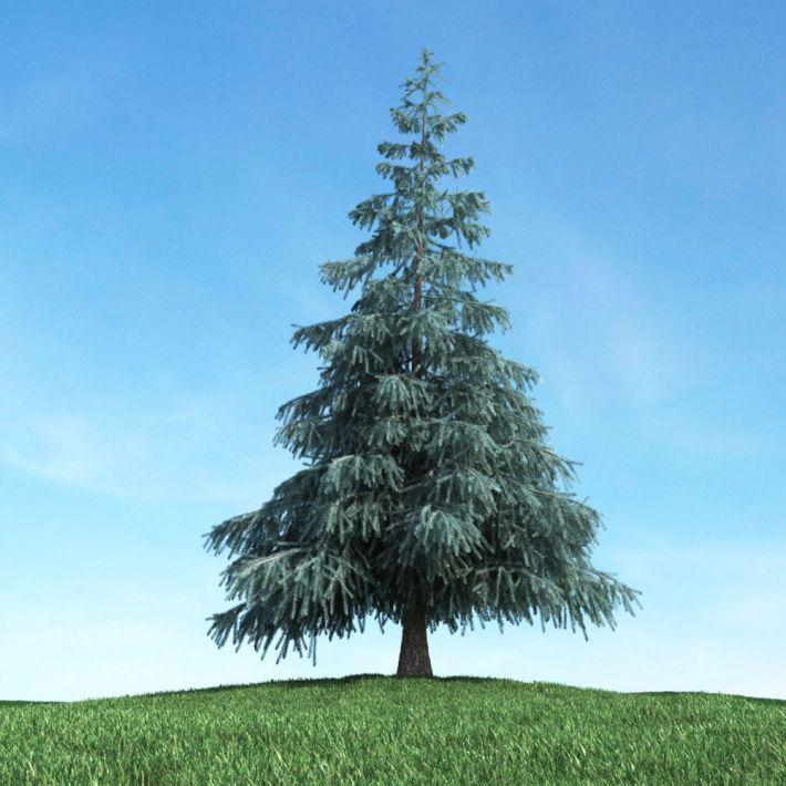 tree 10 am117
