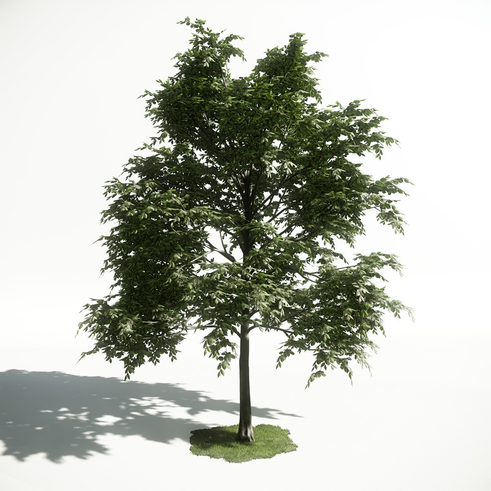 Tree 11 AM1 for CryEngine Archmodels
