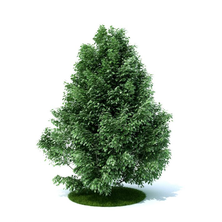 plant 27 am105