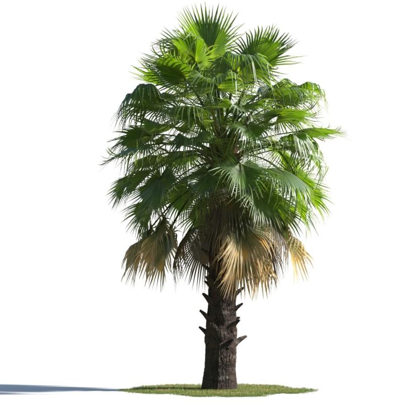 tree 65 AMC1