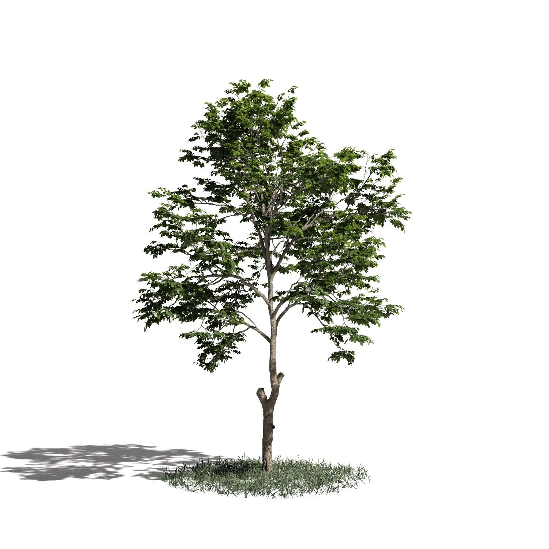 Tree 08 amb1