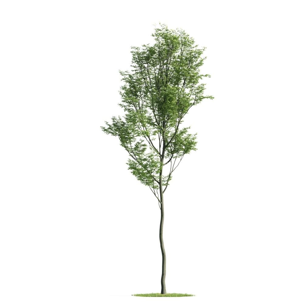 Tree 32 am176