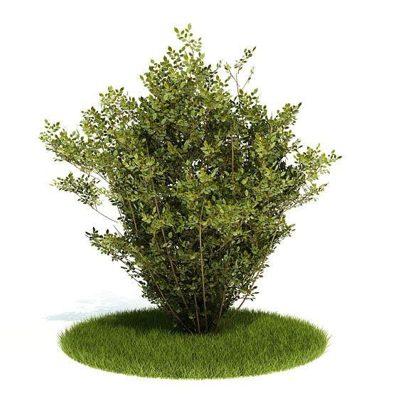 Plant 5 AM52 Archmodels
