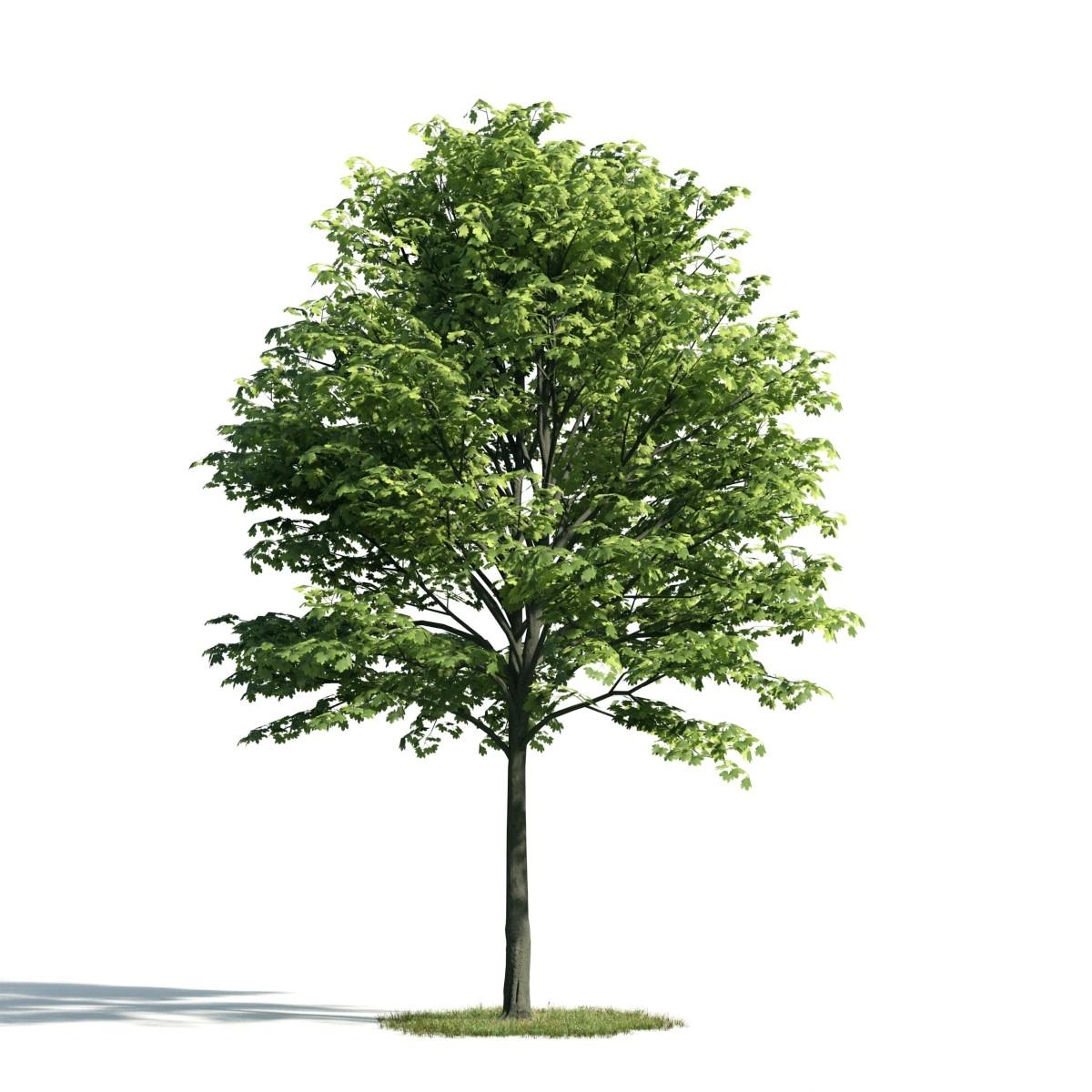 Tree 22 am171