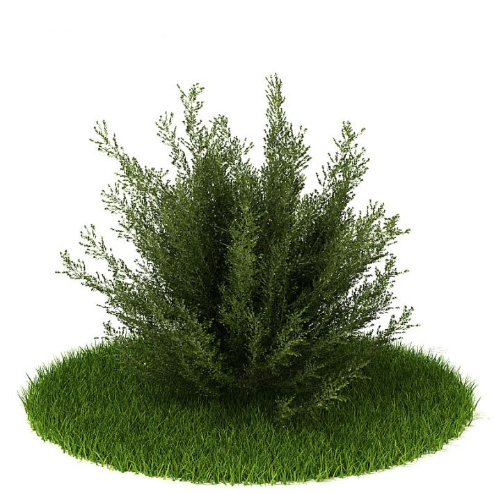 Plant 22 AM42