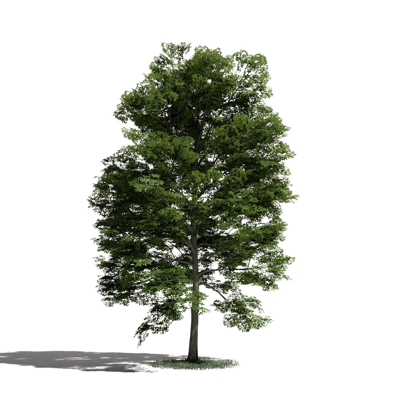 Tree 15 AM1 for Blender Archmodels