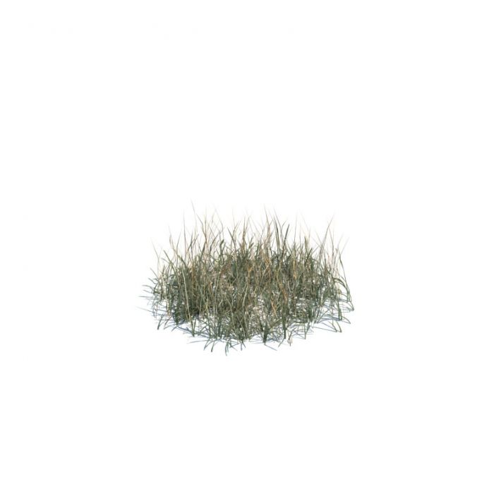 simple grass medium 137 am124