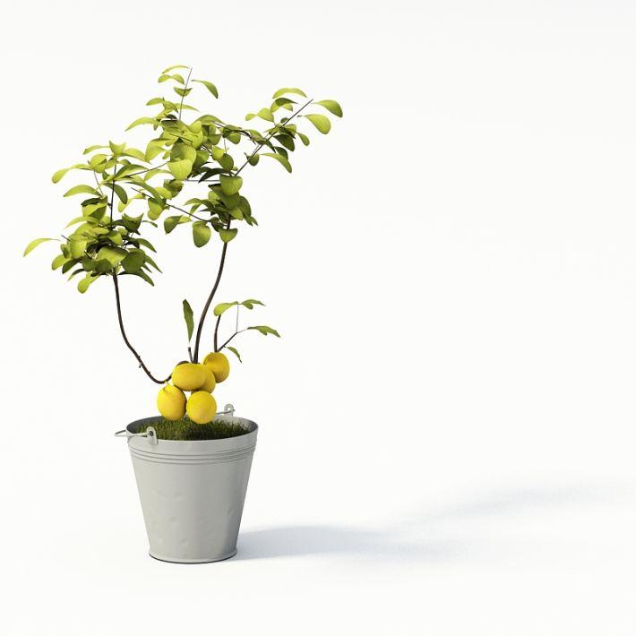 Plant 37 AM24 Archmodels