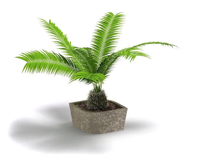 Plant 54 AM4 for Cinema4D Archmodels