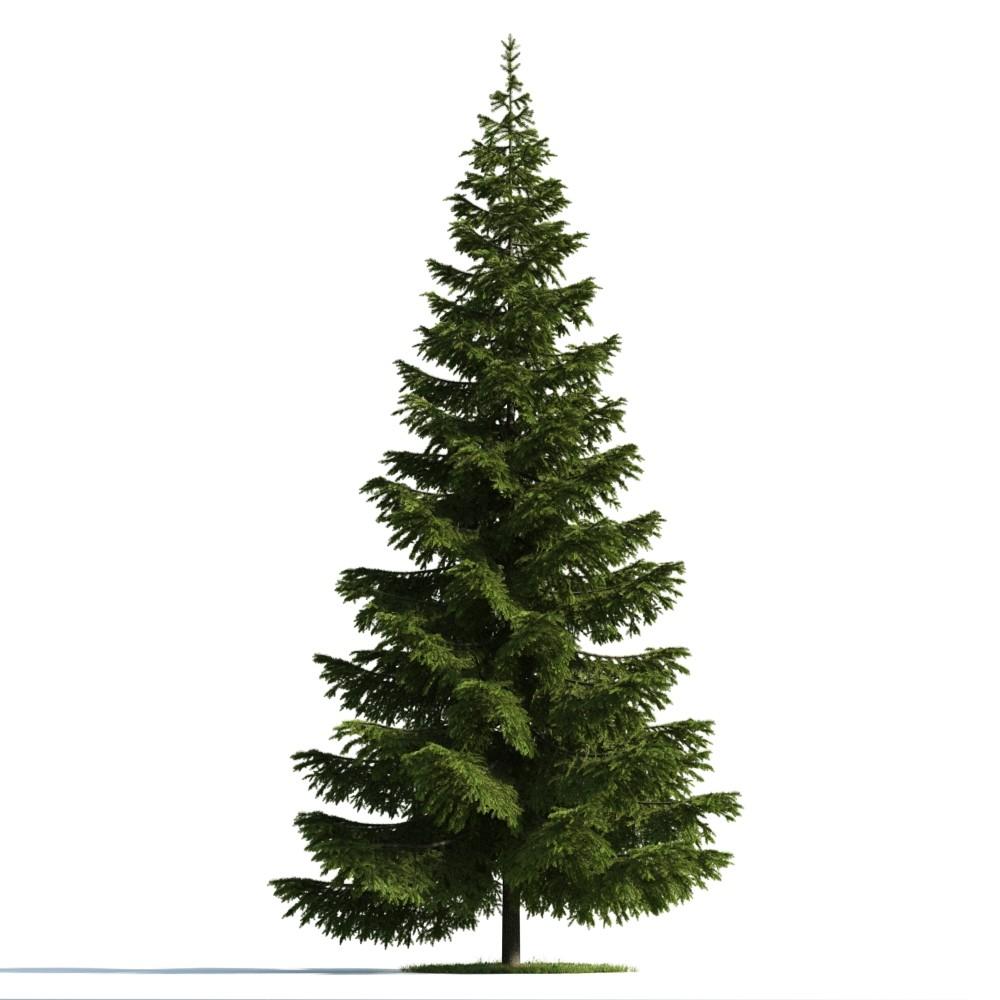 Tree 39 am176