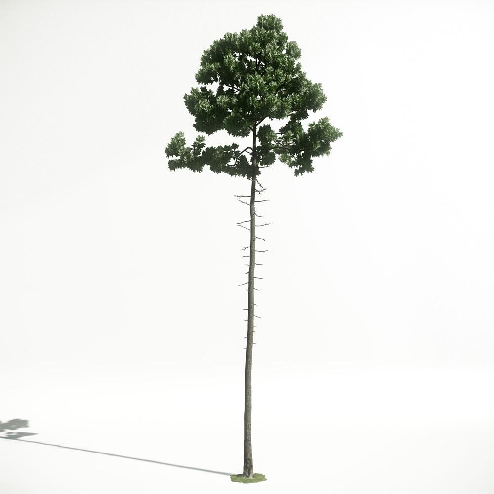 Tree 36 amce1