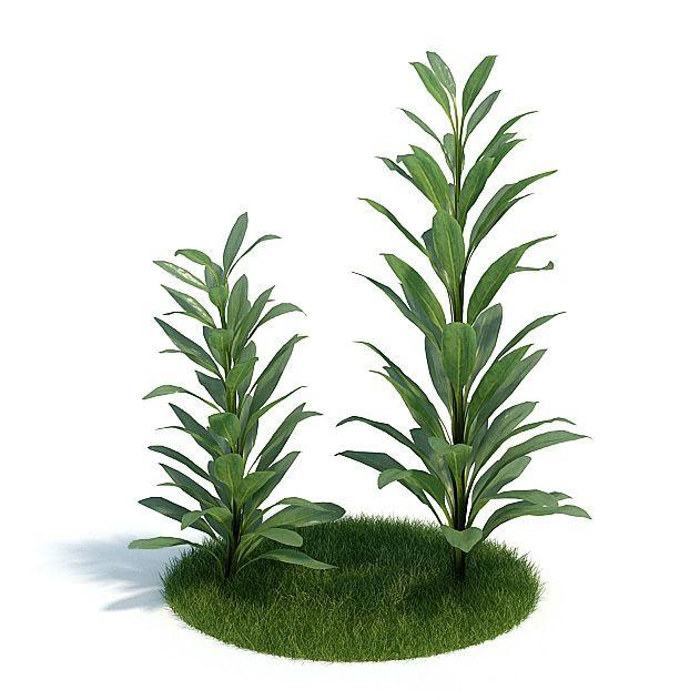 Cordyline glauca Plant 5 AM61 Archmodels