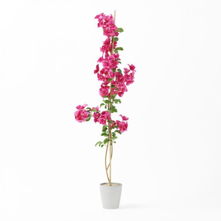 Plant 39 AM75 Archmodels