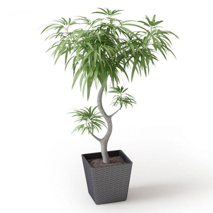 Plant 42 Archmodels vol. 66