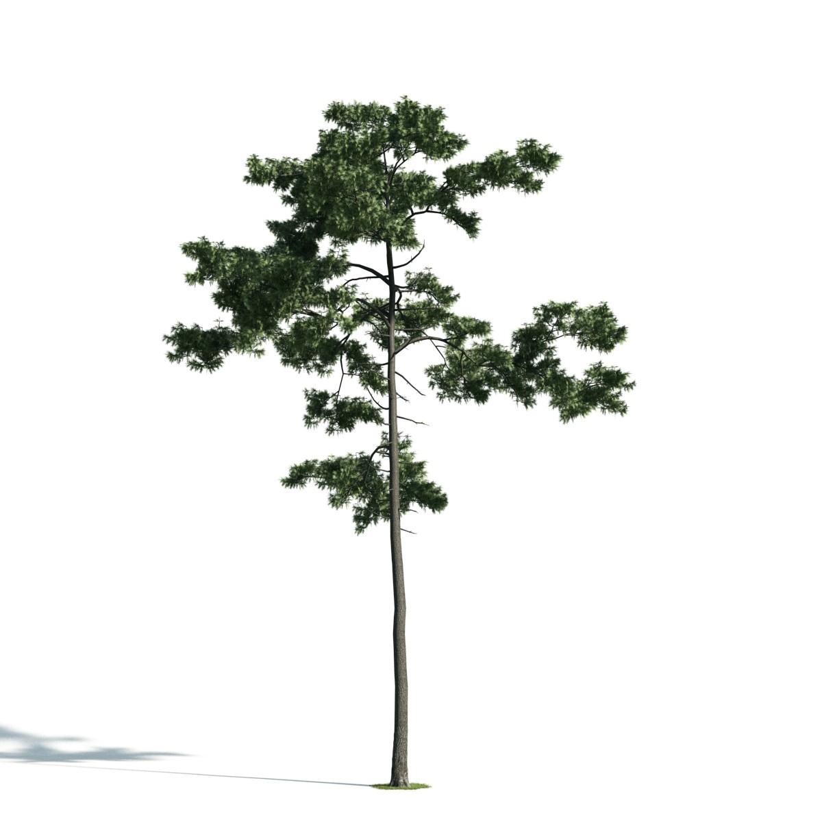 Tree 44 AM171 Archmodels