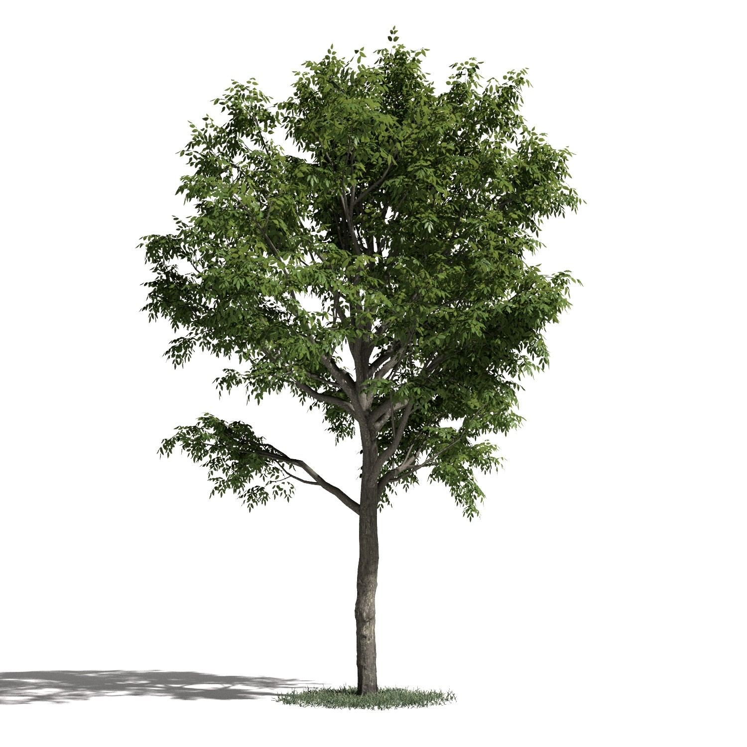 Tree 49 AM1 for Blender Archmodels