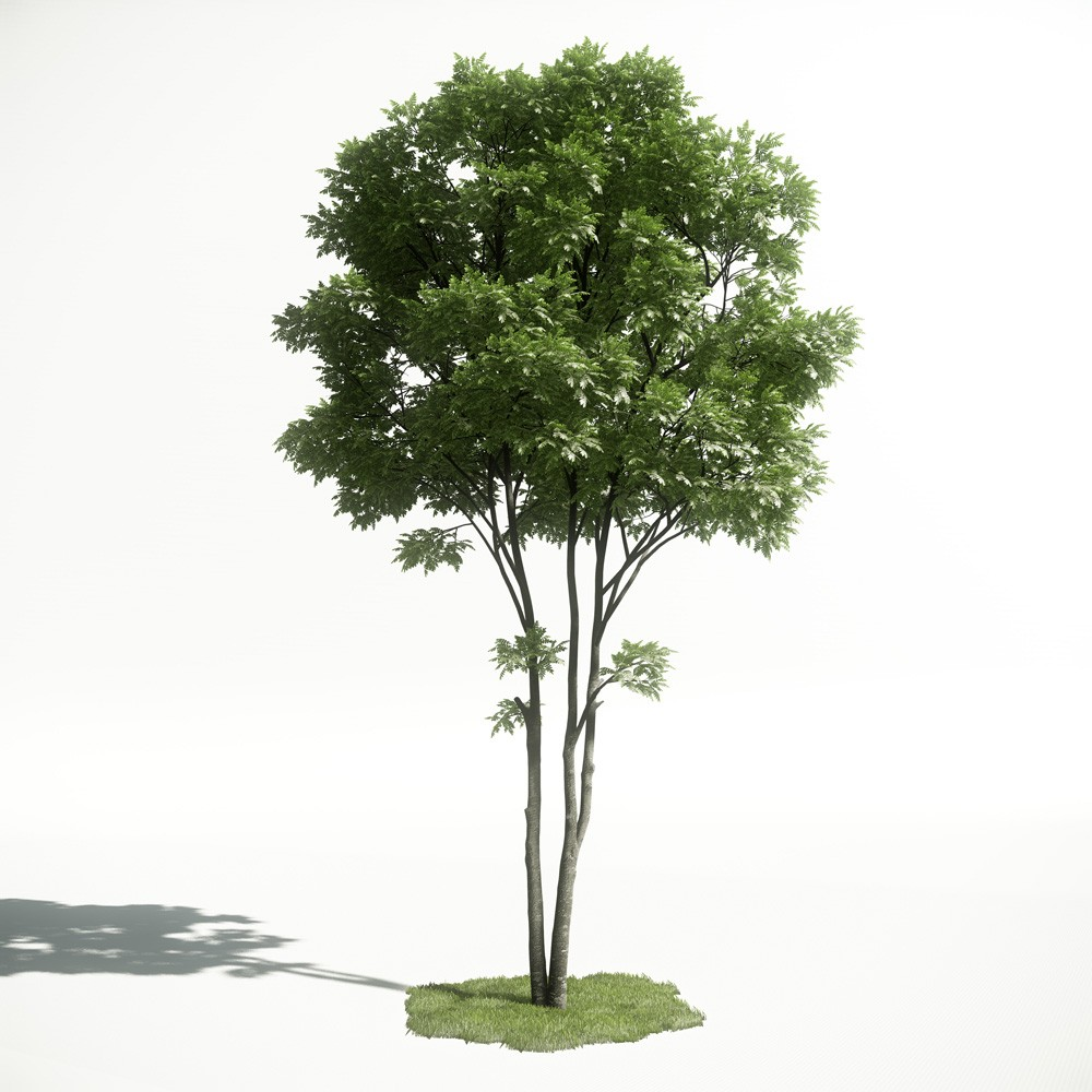 Tree 1 AM1 for CryEngine Archmodels