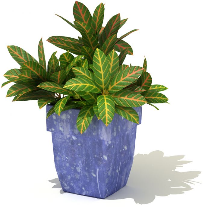 plant 45 AM41