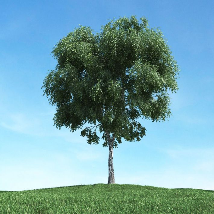 tree 32 AM117 Archmodels