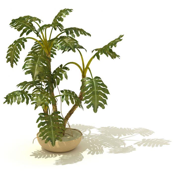 plant 18 AM41