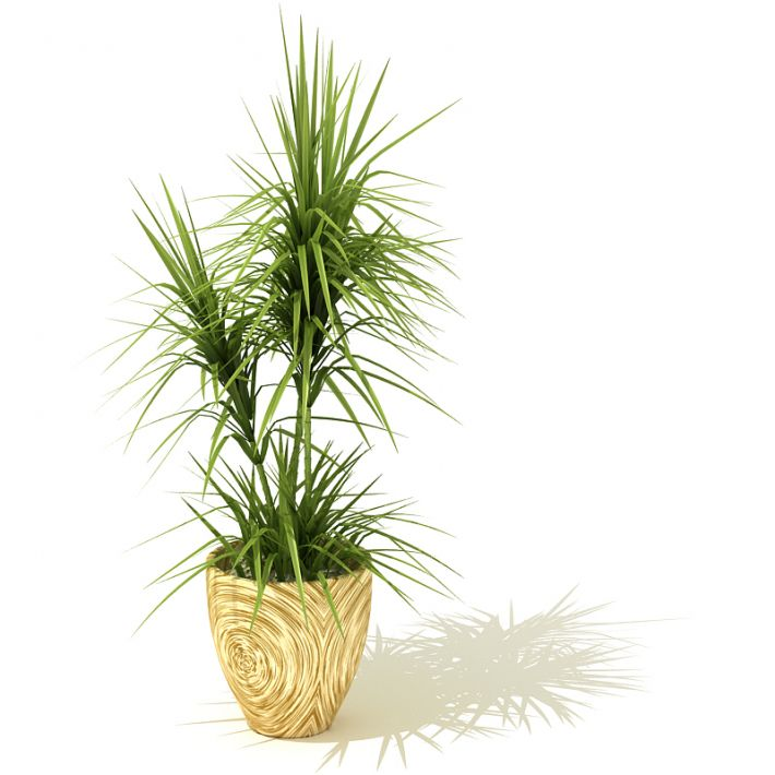 plant 48 AM41 Archmodels