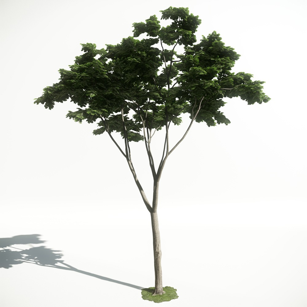 Tree 19 AM1 for CryEngine Archmodels