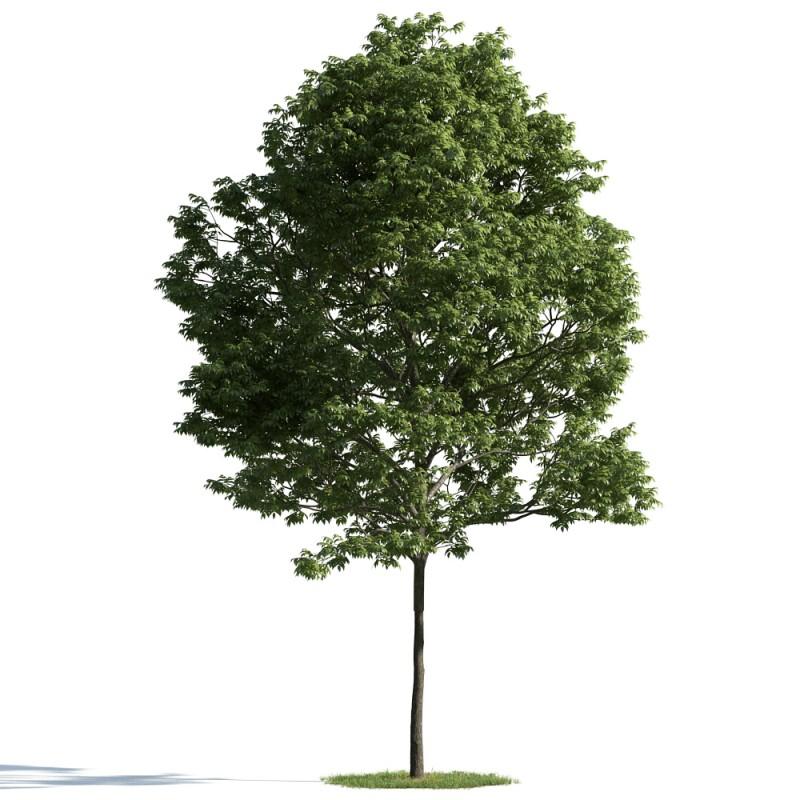 tree 39 am163
