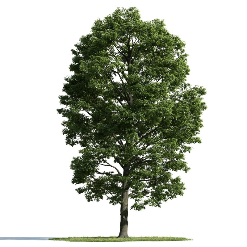 tree 54 AM163 Archmodels
