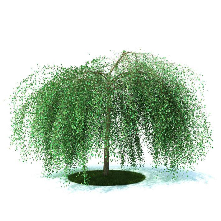 plant 25 AM105 Archmodels