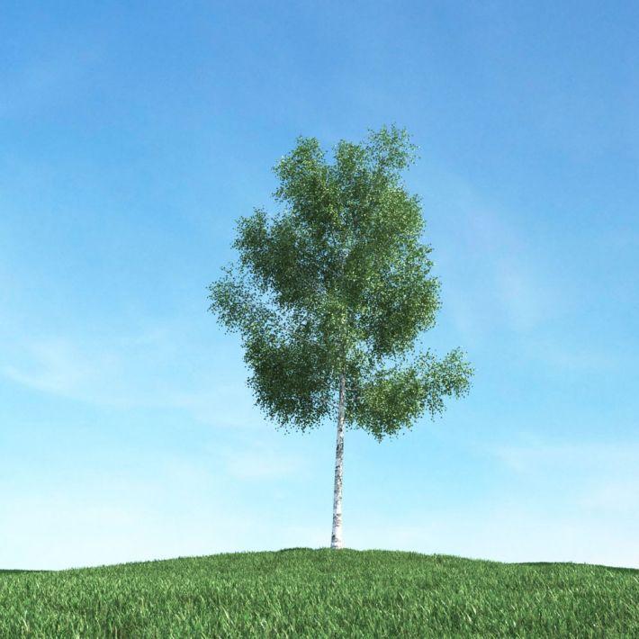 tree 06 am106