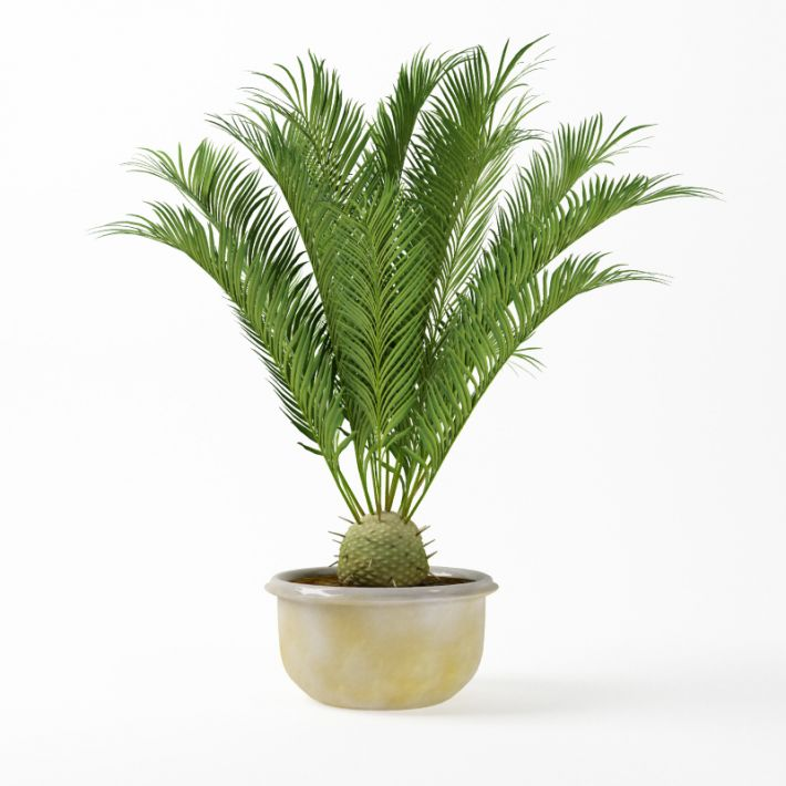 Plant 43 AM75 Archmodels