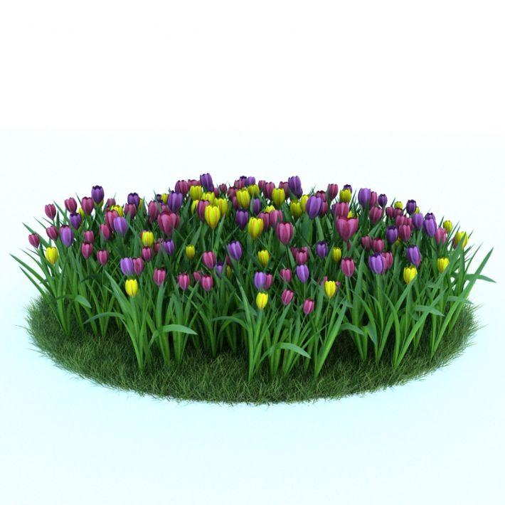 Tulipa batalinii 'Bright Gem' 046 AM86
