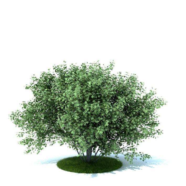 plant 32 AM105 Archmodels