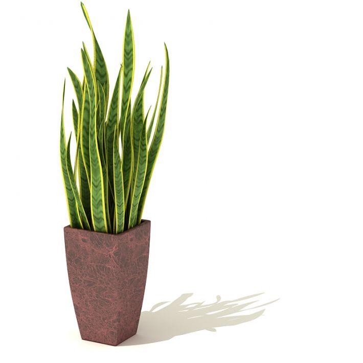 plant 64 AM41