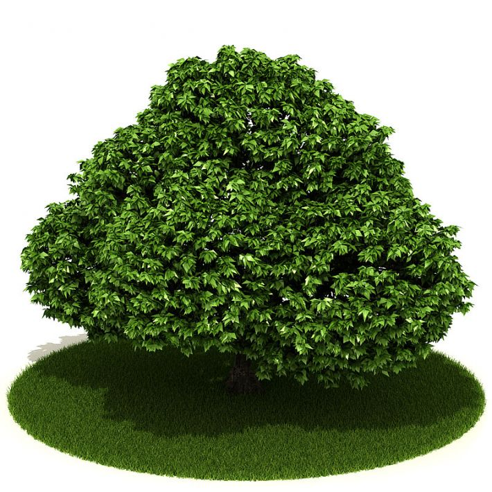 Plant 18 AM42 Archmodels