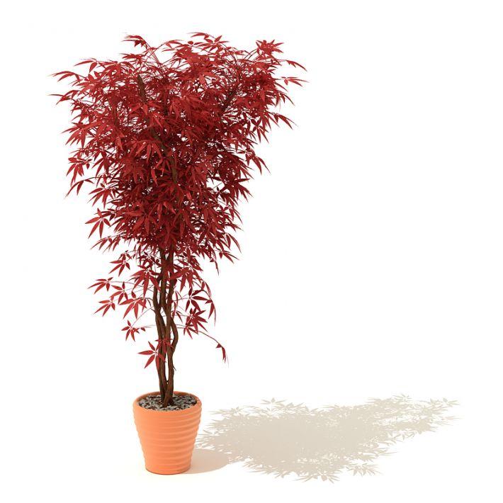 plant 12 AM41 Archmodels
