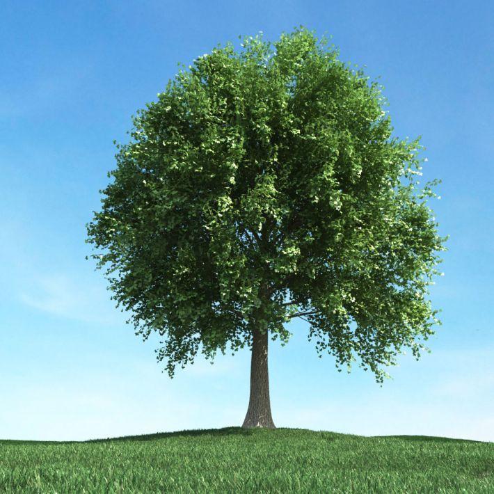 tree 42 am106