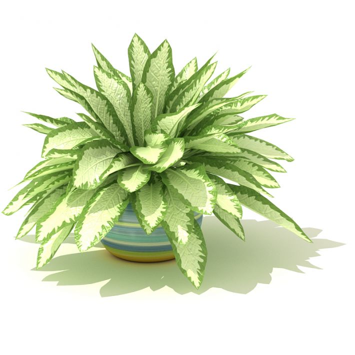plant 60 AM41 Archmodels
