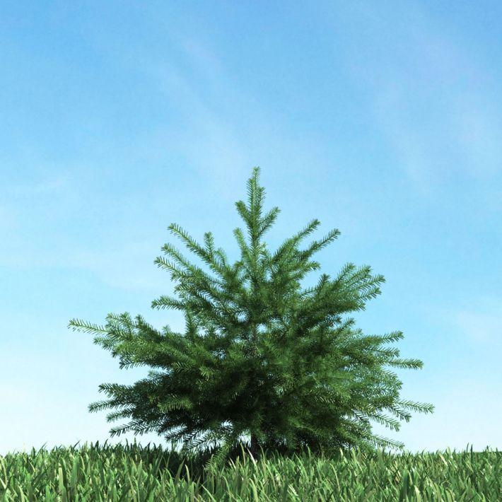 tree 52 AM117 Archmodels